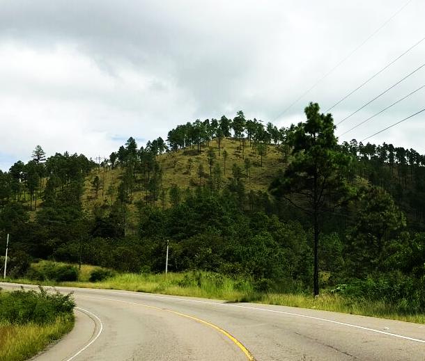 Aangeplant klimaatbos op de heuvel in Leon