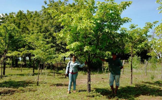 Producenten bij de jonge bomen van het klimaatbos in Leon