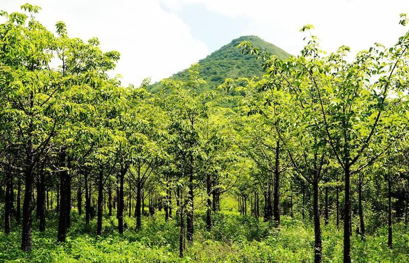 Jonge bomen van het klimaatbos in Leon